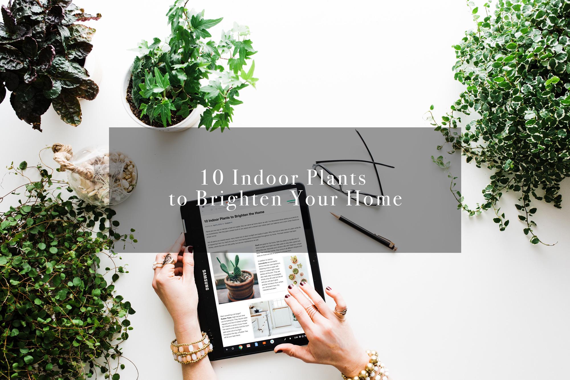 10 Indoor Plants To Brighten The Home