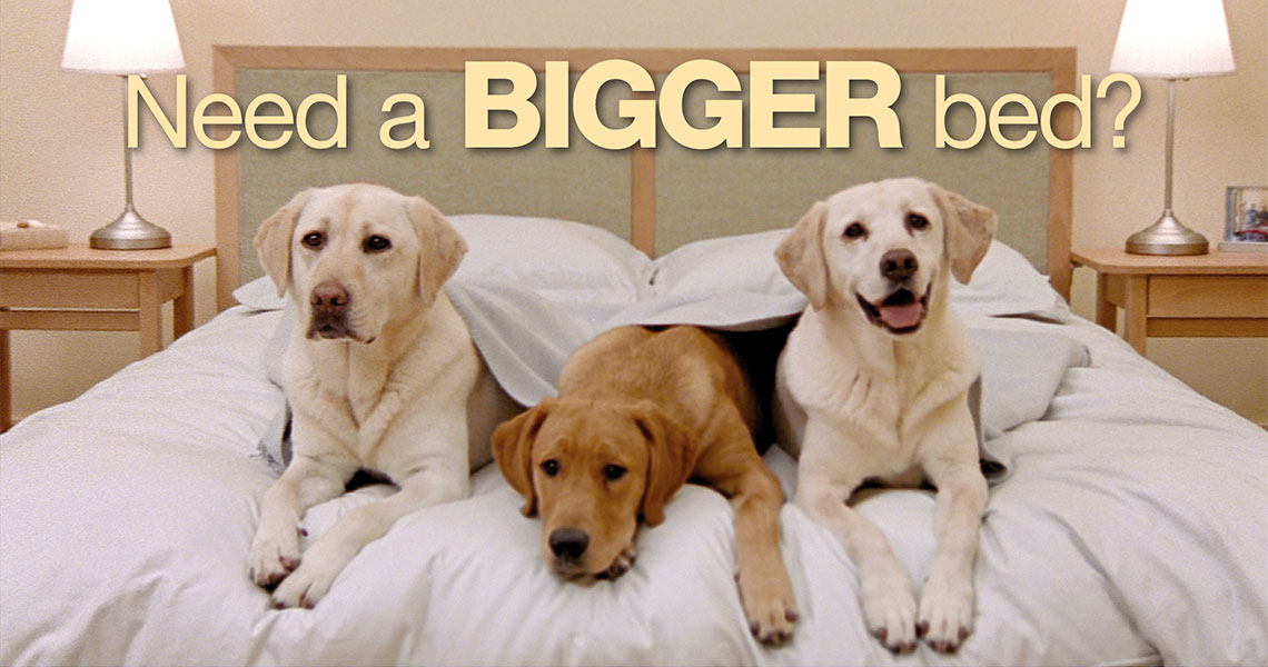 Dogs in Bed- Need a BIGGER bed?